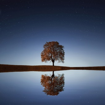 Reflection of a autumn tree in water